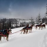 Rocking dogs - dog sledding and dogotherapy in Podwilk